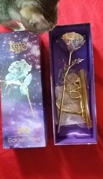 Galaxy Forever Rose True Lovers Shop